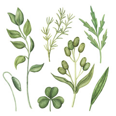 Set of wild summer greenery - wild meadow plants, stems and leaves, watercolour raster illustration isolated on white background. Set of hand-drawn watercolor greenery, green herbs and plants