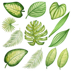Set of watercolor tropical  leaves
