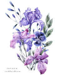 Watercolor illustration with iris. Painting freash flowers on white background Gift card Flowers shop