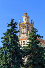 Tower of Lomonosov Moscow State University (MSU) with clock against background of green spruce in sunny summer evening