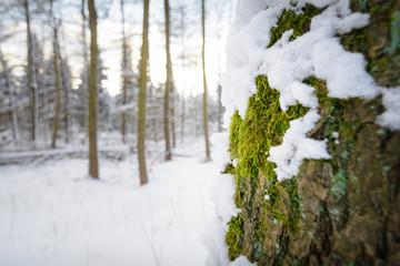 Baum mit Moos im Schnee warm