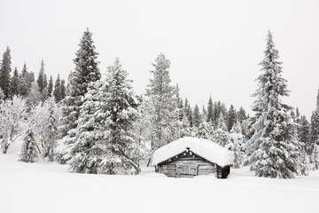 Wood hut in the snow, Levi, Kittila, Lapland, Finland, Europe