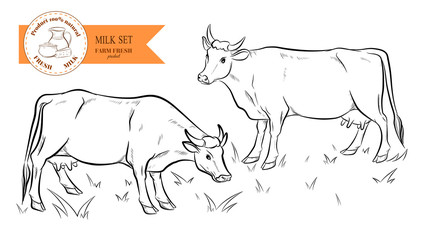 Cows. Hand drawn sketch. Vector illustration