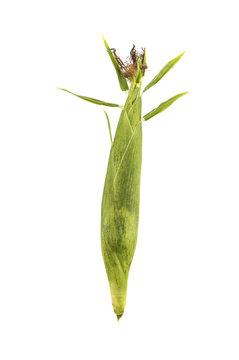 corn on isolated white background