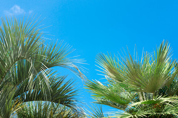 Tropical palm tree on a blue sky background