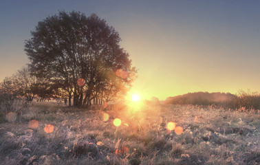 Scenery of autumn nature in morning at sunrise. Sunbeams on autumn meadow with tree. Hoarfrost on yellow grass. Amazing dawn on wild nature with shining bokeh. Beautiful natural scene of countryside