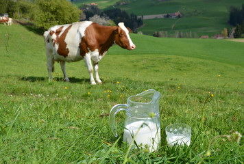Wall Mural - Jug of milk against herd of cows. Emmental region, Switzerland