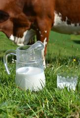 Wall Mural - Jug of milk against herd of cows. Emmental region, Switzerland