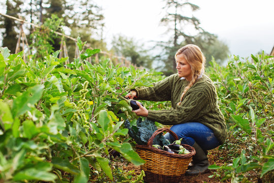 Woman harvesting vegetables on her orchard.