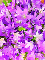 A Lovely Bouquet of campanula