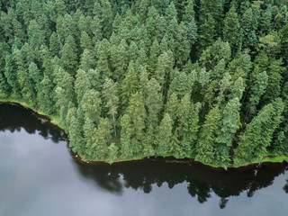 Lake and pine forest from above
