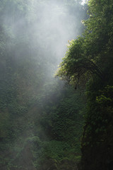 Green Jungle Forest Background
