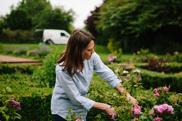 Anonymous woman pruning roses to remove dead flowers and encourage new flowers to grow