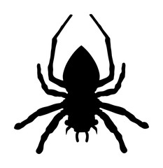 Spider vector silhouette illustration isolated on white background.