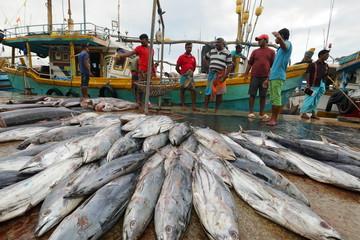 Fang frischer Fisch im Hafen von Matara in Sri Lanka