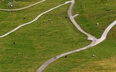Hikers walk past cows on Schwaegalp near the north-eastern Swiss landmark Mount Saentis