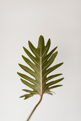 green leaf stem in front of white wall