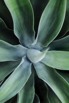Agave patterns