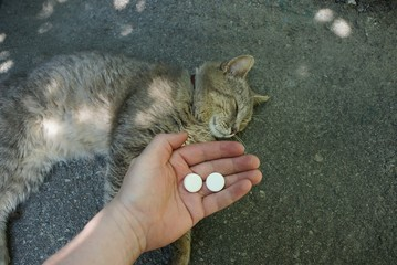 hand with white pills and a gray cat lying on the asphalt