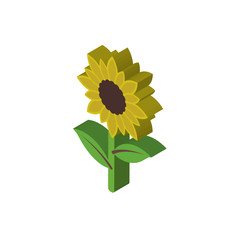 Sunflower isometric right top view 3D icon