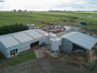 Overhead view of dairy farm with milking herd in the yard waiting to be milked