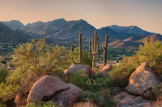 Saguaro cactus grow on the slopes of the Pinnacle Peak Park in the Scottsdale community, AZ.