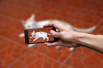 Hand with mobile phone take a photo of white cat with a little bit orange color lying down on brown floor.