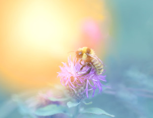 Photo of a macro bumblebee