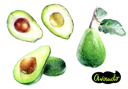 Avocado watercolor hand draw illustration