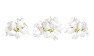 Floral decoration design mock up, white flowers blossom collage