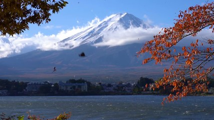 Wall Mural - Colorful Autumn in Mount Fuji, Japan - Lake Kawaguchiko is one of the best places in Japan to enjoy Mount Fuji scenery of maple leaves changing color giving image of those leaves framing Mount Fuji.