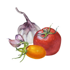 Watercolor sketches of vegetables. Tomatoes and garlic on a white background. Hand drawn illustration.