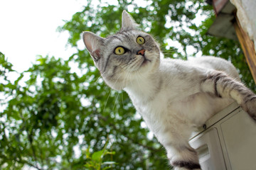 Gray cat with expressive eyes climb on the green garden blurred background