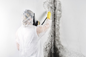 A professional disinfector in overalls processes the walls from mold. Removal of black fungus in the apartment and house. Aspergillus..