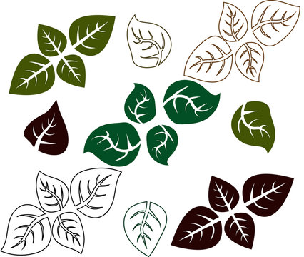 Green basil leaf. Icons isolated on white
