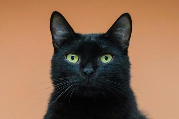 The face of a black cat closeup