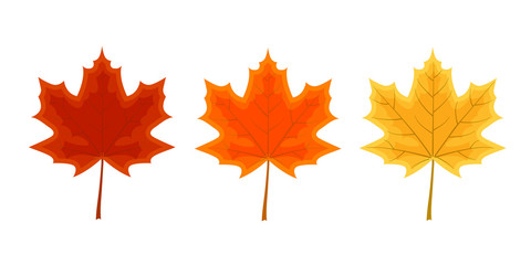 Set of three maple leaves.  Autumn decoration vector illustratio