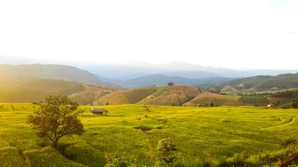 Panoramic View Of Agricultural Field Against Sky in Chiang Mai Thailand.