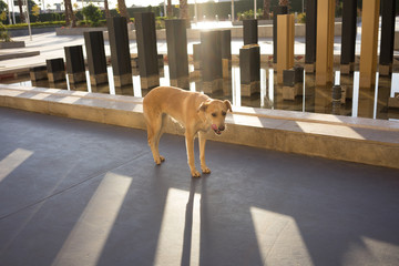 brown street dog standing in shadow