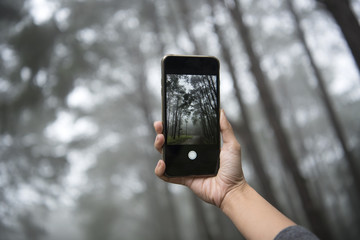 traveler photographing with mobile phone and enjoying a beautiful nature forest.