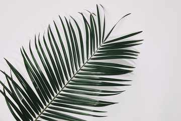 top view of of palm branch over white surface