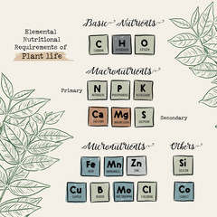 Guide of Macronutrients and Micronutrients for Plants vector.