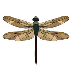 isolated, insect, dragonfly