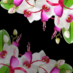 Beautiful floral background of orchids and fuchsia