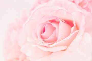 Sweet color roses made with gradient in soft style for abstract background
