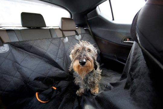 Trasporto cane in auto