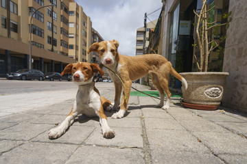 The couple of dogs at the street