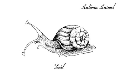 Hand Drawn of Autumn Snail White Background