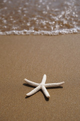 Star fish on beach sand.