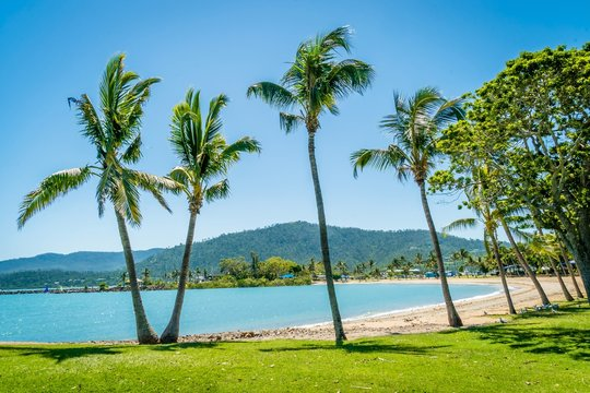 Airlie beach palm trees and coconut trees in Australia
